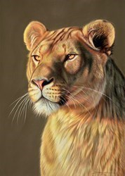 Lioness II by Darryn Eggleton -  sized 19x27 inches. Available from Whitewall Galleries
